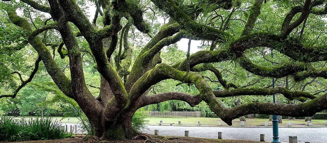 psychogenealogie-sylvia-penard-arbre-min